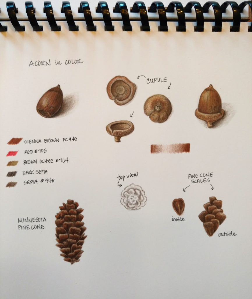acorn-pinecone-page_final