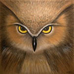 Owl Eyes 12x12 pastel on cardboard