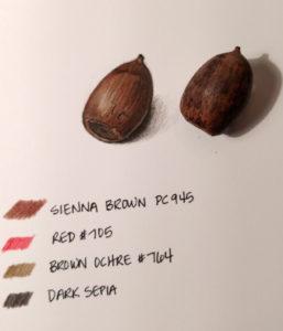 acorn-1